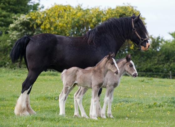 110513twin_foals_113