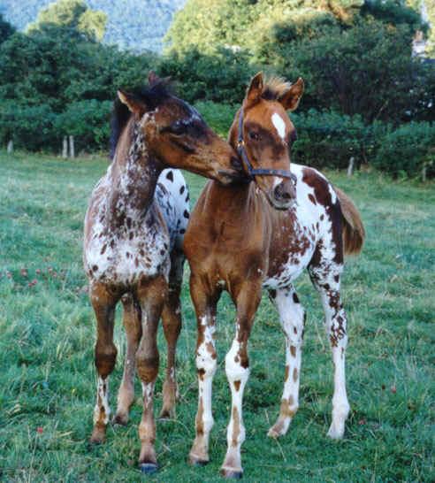 baby-horses