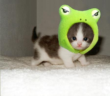 cutest-kitten-hat-ever-13727-1238540322-17
