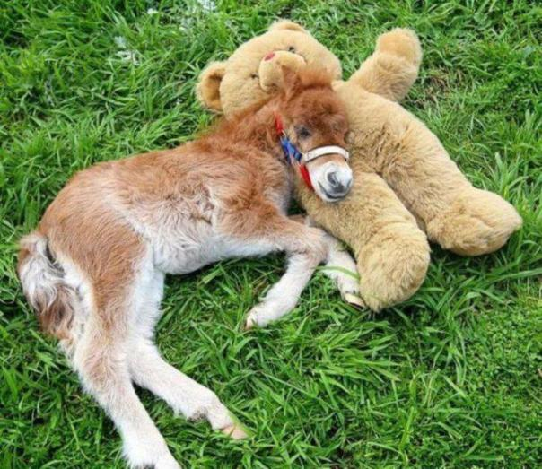 Foal-and-Teddy1