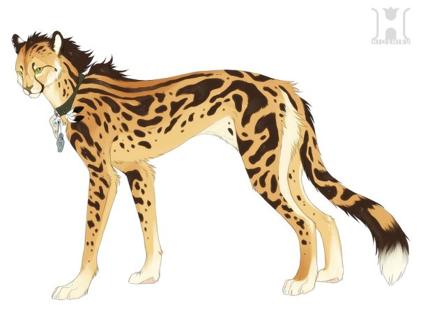 king_cheetah_design_by_hioshiru-d69vlyt